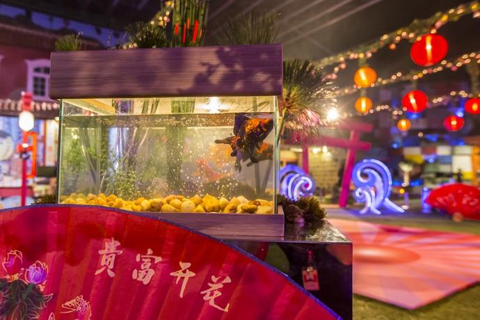 A fauna oriental estava representada com aquários repletos de peixes (Foto: Artur Meninea/Gshow)