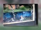 Vídeo flagra dupla de suspeitos escolhendo vítima em rua de Belém