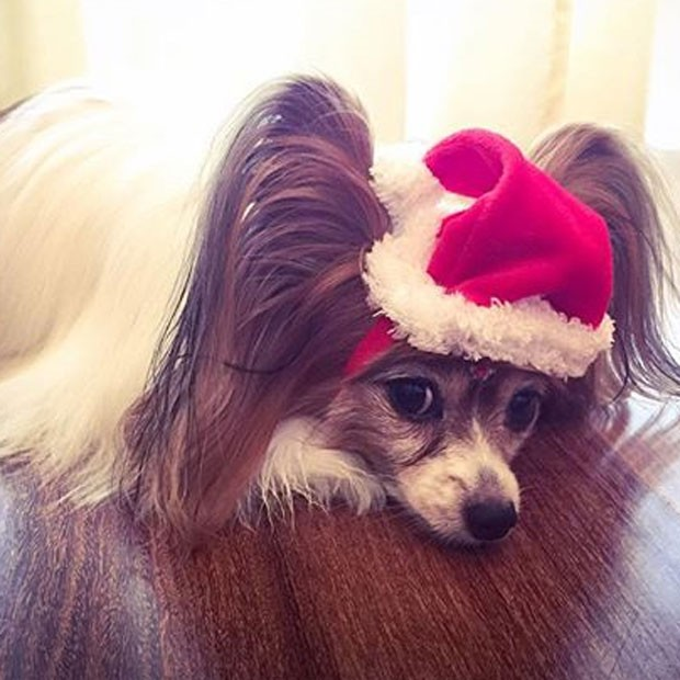 Zelda, cachorrinha de estimação da Sandy (Foto: Instagram/ Reprodução)