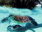 Isis Valverde posta foto de biquíni nadando com tartaruga marinha