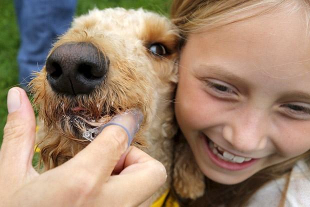 Tentativa foi realizada em festival canino em Somerville, no estado de Massachusetts  (Foto: Brian Snyder/Reuters)