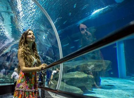 Rita aceita trabalhar como sereia no aquário