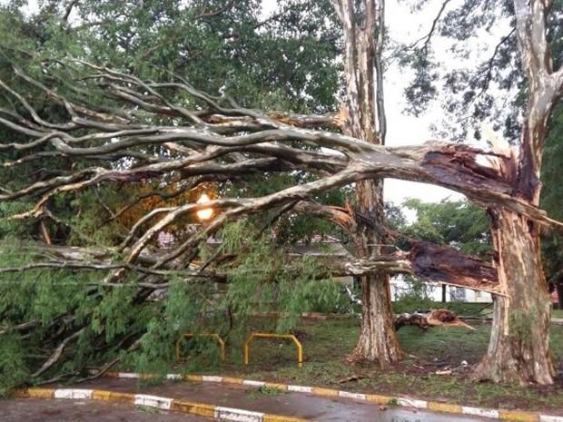 Ventania partiu árvore ao meio (Foto: Adolfo Lima/TV TEM)