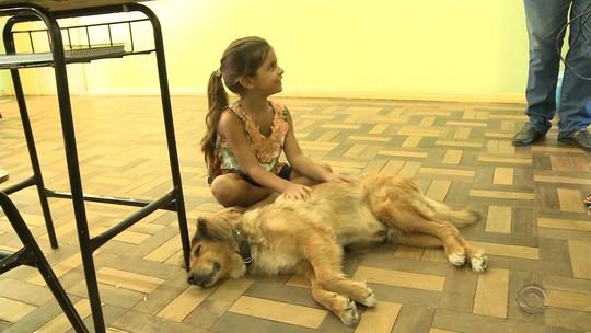 Cão adota escola em Uruguaiana e tem até tratamento pago por alunos