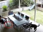 Cão 'salva' dono ao alertar sobre cobra venenosa na Austrália