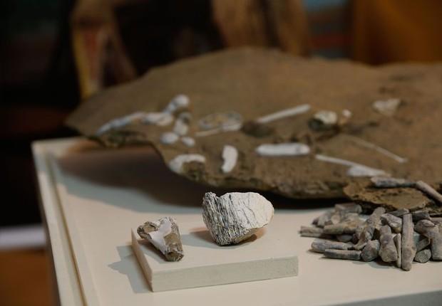 Pesquisadores brasileiros, em parceria com chineses, apresentam réplicas de descobertas no campo da paleontologia: ovos e restos fossilizados de pterossauros escavados no noroeste da China que ficarão expostos no Museu Nacional  (Foto: Fernando Frazão/Agência Brasil)