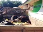 Três são presos por esquartejar vaca  (Júnior Freitas/ G1)