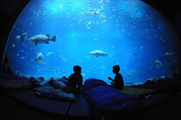 Georgia Aquarium (Foto: divulgação)