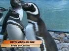Animais reabilitados voltam ao mar no Sul do Rio Grande do Sul
