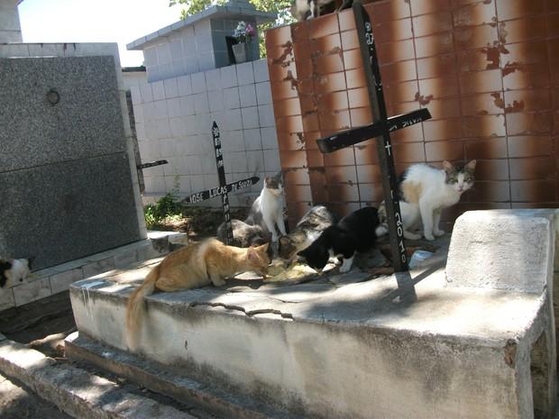 Animais domésticos circulam livremente pelo cemitério público (Foto: Waldson Costa/G1)