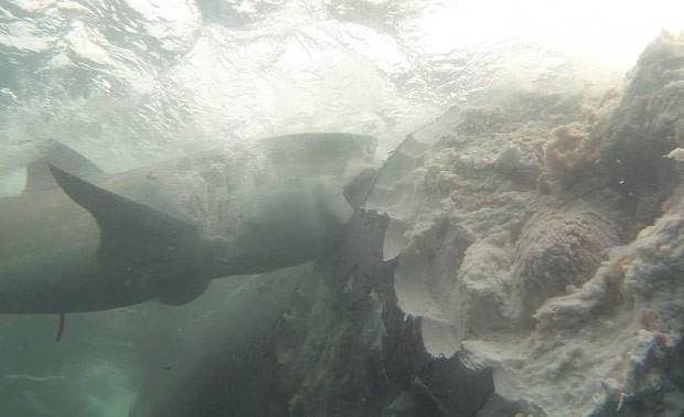 Grupo fez mergulho no momento em que tubarões devoravam carcaça de baleia (Foto: Reprodução/Facebook/Dirk Schmidt)