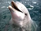 Golfinho fica alerta por até 15 dias sem ficar cansado, sugere estudo
