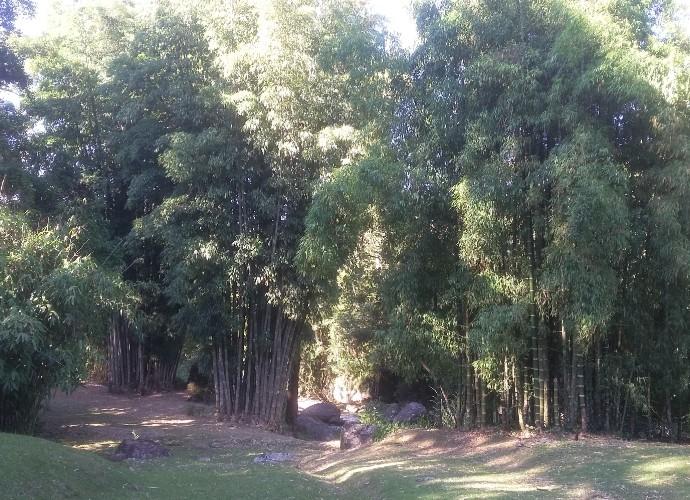 Program deste sábado (06) vai falar das muitas utilidades do bambu (Foto: Rio Sul Revista)