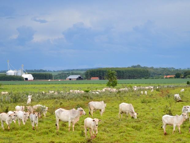 Fazenda Laudejá, em Bonito (MS), onde são adotadas uma série de boas práticas para minimizar o consumo de água, com a integração lavoura-pecuária (Foto: Anderson Viegas/Do Agrodebate)