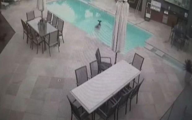 Cena foi registrada pelas câmeras de segurança do imóvel (Foto: Reprodução/Facebook/Amy Garraway)
