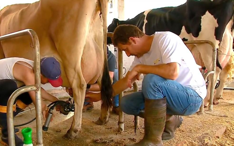 Produtores de leite busca melhoria na qualidade (Foto: Reprodução/RBS TV)
