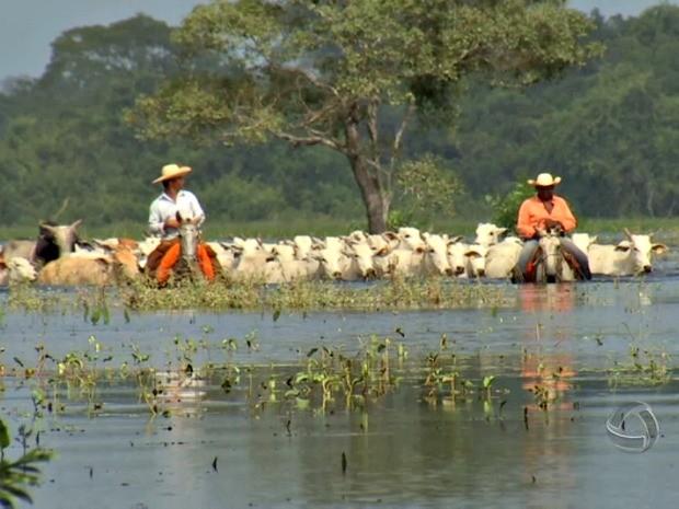 Enchente no Pantanal (Foto: Reprodução/TVCA)