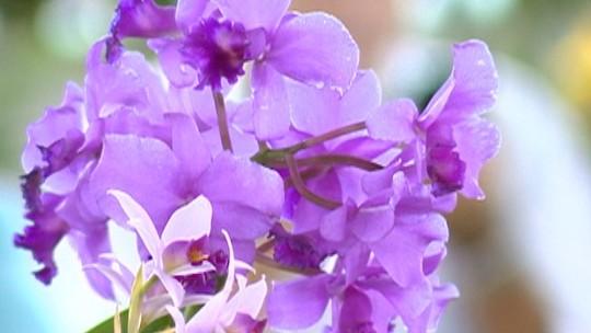 Exposição atrai público com orquídeas de diversas cores, formas e até cheiros diferentes