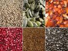 Alerta! Nutricionista ensina como comer sementes sem prejudicar a saúde