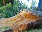 Galho de árvore cai em motociclista que passava por avenida, em Goiânia