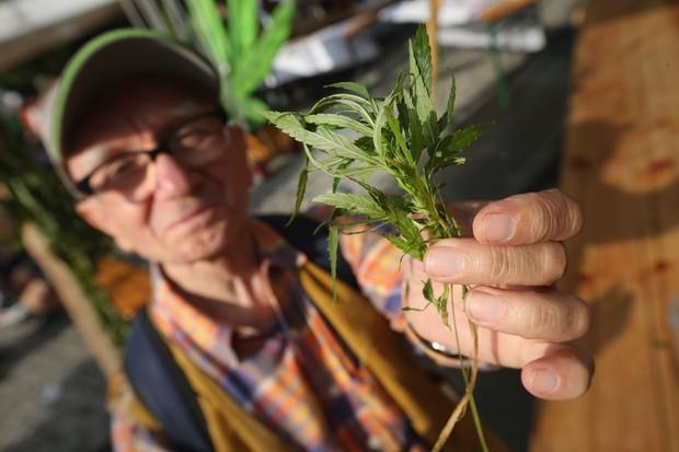 Cultivo de marijuana (Foto: Getty Images)