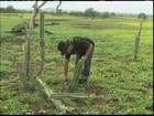 Bahia tem municípios com fartura de pasto e outros com seca