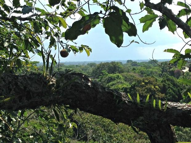 Belezas naturais da floresta amazônica é um dos focos do Amazon  Street View (Foto: Divulgação/Amazon Street View)