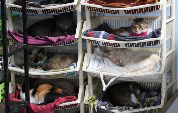Gatos dormem em suas camas na casa da enfermeira Maria Torero em Lima, no Peru (Foto: Martin Mejia/AP)