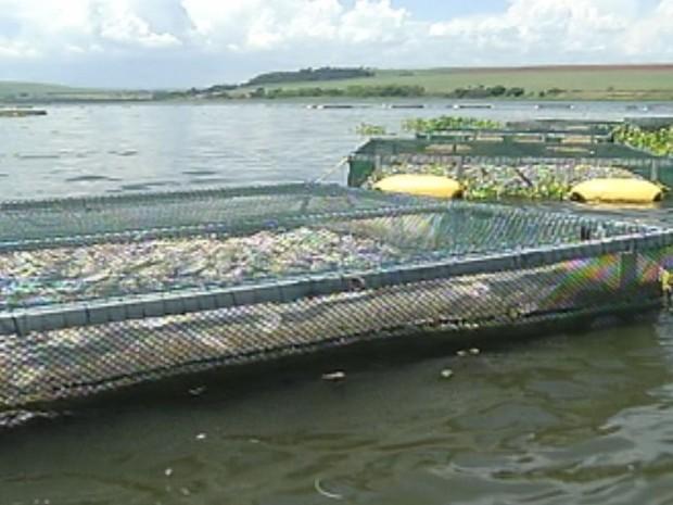 No rio há 24 tanques de criação de peixes  (Foto: reprodução/TV Tem)