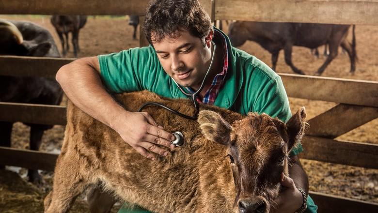 médico-veterinário (Foto: Conselho Federal de Medicina Veterinária)