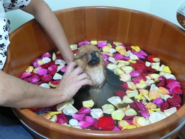 Cão aproveita sessão de ofurô (Foto: Rosana Antunes Estrada)