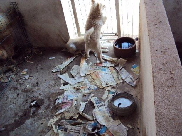 Segundo polícia, animais resgatados foram levados para outra ONG (Foto: Divulgação/Polícia Ambiental)