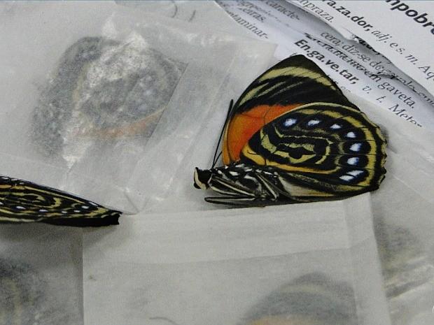 Borboletas mortas foram encontradas dentro de dicionário (Foto: Reprodução/TV Amazonas)