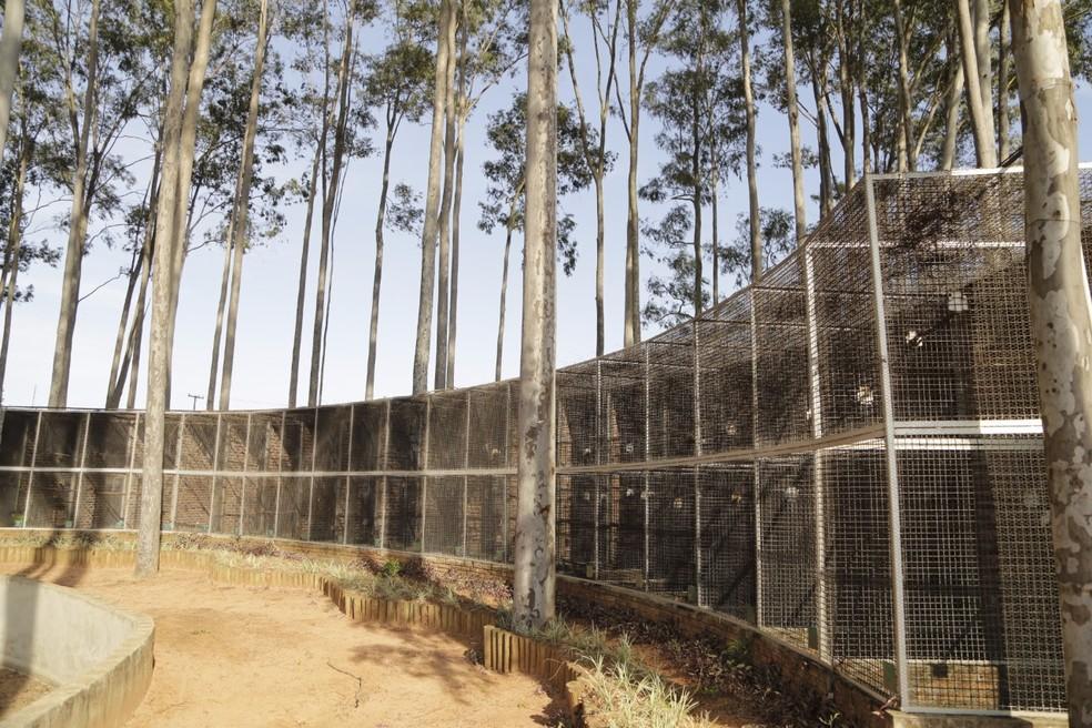 Viveiro funciona em Borá no Instituto Pauxi Mitu (Foto: Instituto Pauxi Mitu / Divulgação )