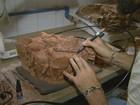 USP recria 'primo' de sapo que parecia jacaré e viveu há 260 milhões de anos