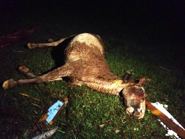 Vários animais foram encontrados mortos após a tempestade (Foto: Michelli Arenza/RPC)