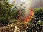 Focos de queimadas aumentam 34% no Piauí em apenas um ano, diz INPE