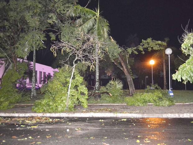 Mais de 20 registros de quedas de árvores foram feitos em Osvaldo Cruz (Foto: Valdemir Anselmo/Cedida)