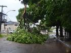 Ventania em Macapá derrubou 90 árvores, cinco em cima de carros