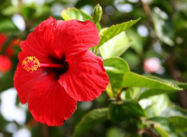 Flores comestíveis: como cultivar em casa e usar em receitas (Foto: Reprodução)