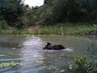 Ursinho é flagrado em 'primeira aula de natação' nos EUA