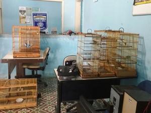 Foram apreendidas gaiolas com aves silvestres  (Foto: Divulgação/ Policia Militar)