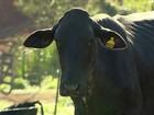 Preço do leite cai em MG e criadores se preocupam