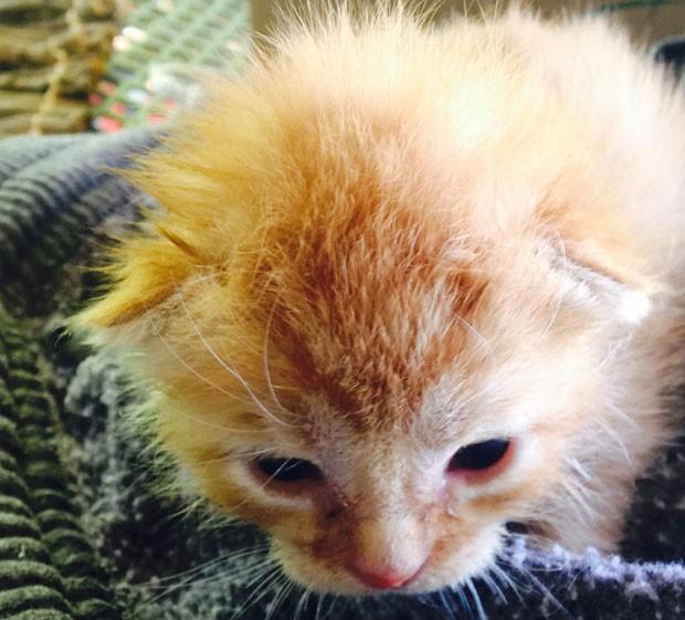 Gato achado em caminhão de reciclagem foi adotado por funcionário da prefeitura de Peonia (Foto: Rhonda Humbles/AP)