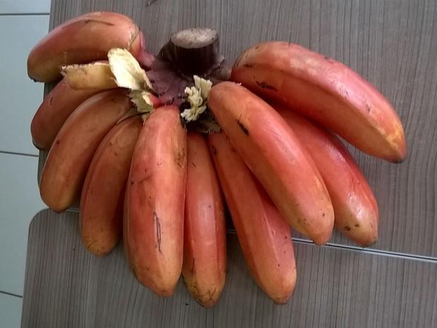 Banana de coloração avermelhada foi colhida no Oeste de SC (Foto: Fernando Correa)