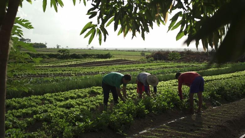 agricultura-documentário (Foto: Divulgação)