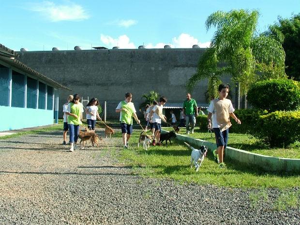 Dog walkers passearam com 20 cães que viviam há anos no canil  (Foto: Divulgação)
