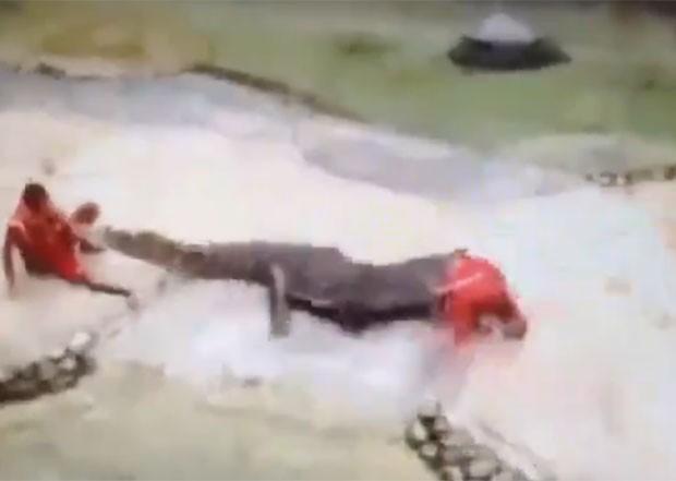 Treinador levou mordida ao colocar a cabeça na boca de crocodilo (Foto: Reprodução/Live Leak/smithers360)