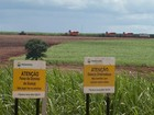 Dilma visita Ribeirão Preto para lançar primeiro trecho de etanolduto
