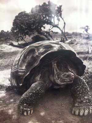 f3866e1baf Tartaruga de Galápagos chamou a atenção de espectadora (Foto  Isabela  Marinho  G1)